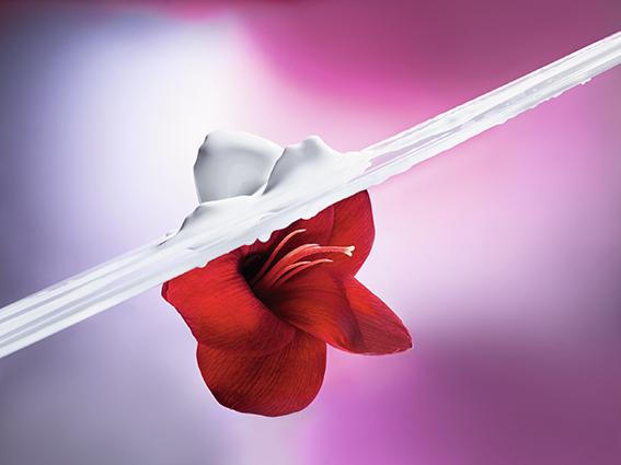 Dior flor de hibisco