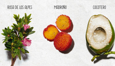 ingredientes naturales de My Clarins