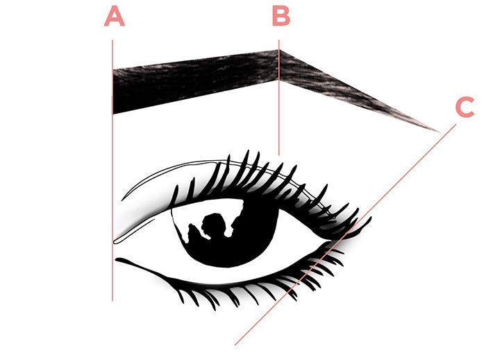 Esquema Benefit partes de la ceja