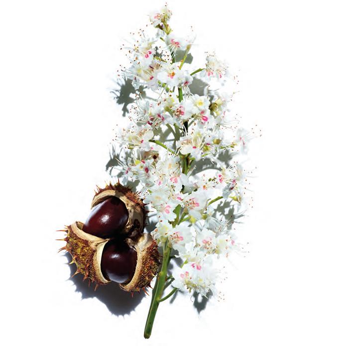 Flores de castaño y castaña, dos ingredientes clave en la fórmula de Nutri-Lummière, de Clarins.