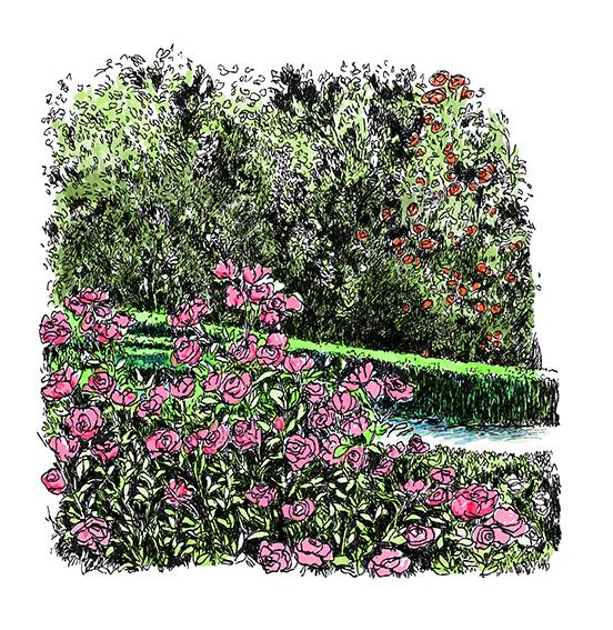 Chanel patrocina la restauración de la Rosaleda del Real Jardín Botánico de Madrid